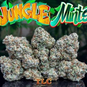 jungle boys jungle mints